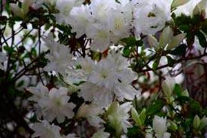 coronas de flores Tanatorio de Loeches