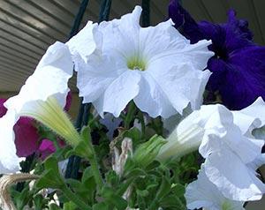 coronas de flores Tanatorio Villanueva De La Cañada