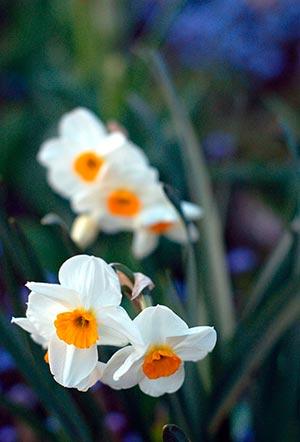 coronas de flores Tanatorio Sur