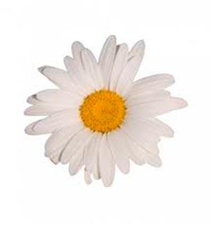coronas de flores Tanatorio de Carabaña