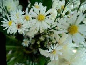 coronas de flores Tanatorio Galapagar