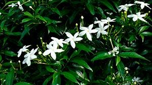 coronas de flores Tanatorio San Martín De La Vega