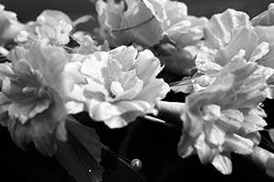 coronas de flores Tanatorio Alcalá De Henares