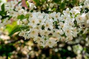 coronas de flores Tanatorio Arganda Del Rey
