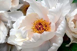 coronas de flores Tanatorio Alpedrete