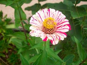 coronas de flores Tanatorio Villalba
