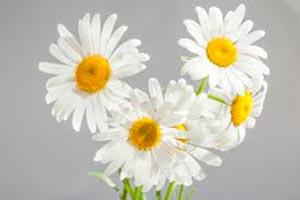 coronas de flores Tanatorio de Ajalvir