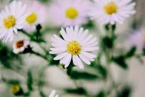 coronas de flores Tanatorio San Lorenzo Del Escorial