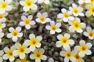 coronas de flores Tanatorio Soto Del Real