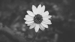 coronas de flores Tanatorio El Escorial