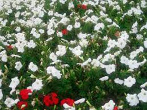 coronas de flores Tanatorio Ciempozuelos