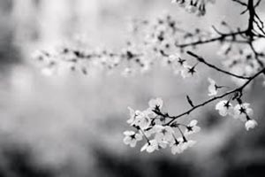 coronas de flores Tanatorio Boadilla Del Monte
