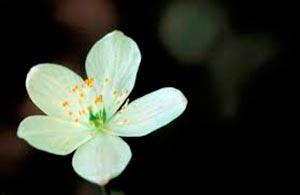 coronas de flores Tanatorio Morata De Tajuña