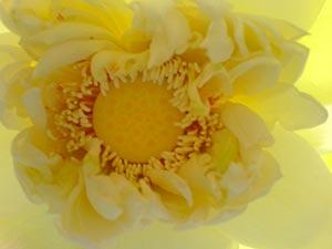 coronas de flores Tanatorio de San Agustín de Guadalix