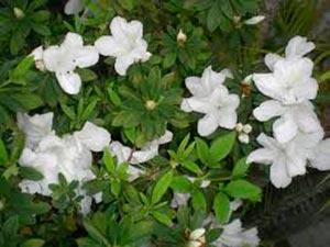 coronas de flores Tanatorio de Valdemorillo
