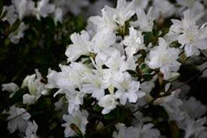 coronas de flores Tanatorio de Torrelodones