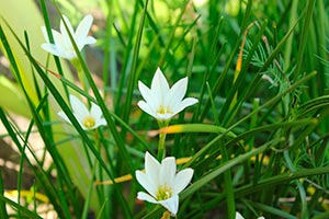 coronas de flores Tanatorio de Villarejo de Salvanés