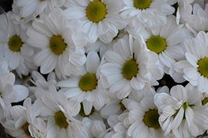 coronas de flores Tanatorio de Chapinería
