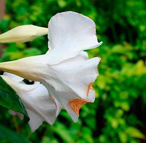 coronas de flores Tanatorio de Serranillos del Valle
