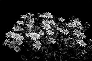 coronas de flores Tanatorio Pinto