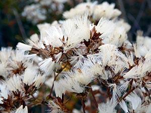 coronas de flores Tanatorio de Valdemanco
