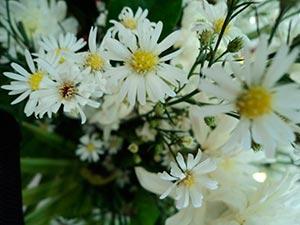coronas de flores Tanatorio M30