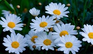 coronas de flores Tanatorio Navalcarnero