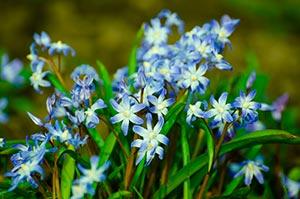 coronas de flores Tanatorio Torrejón De Ardoz