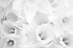 coronas de flores Tanatorio M40