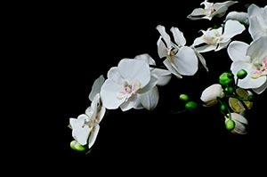 coronas de flores Tanatorio Alcorcón