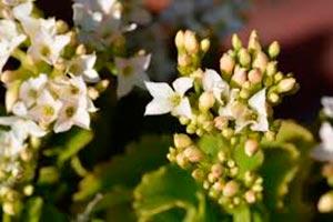 coronas de flores Tanatorio Pozuelo De Alarcón