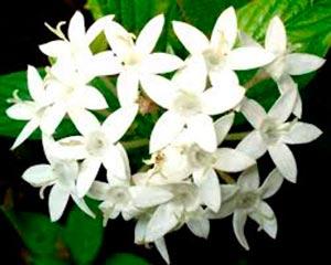 coronas de flores Tanatorio de Pelayos de La Presa